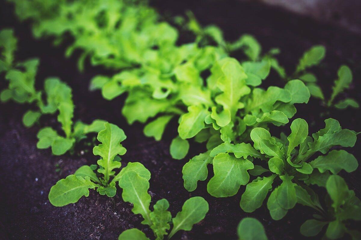 Top 10 Organic Gardening Tips for Those Without a Green Thumb